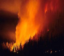 Реферат чс лесные пожары 3306